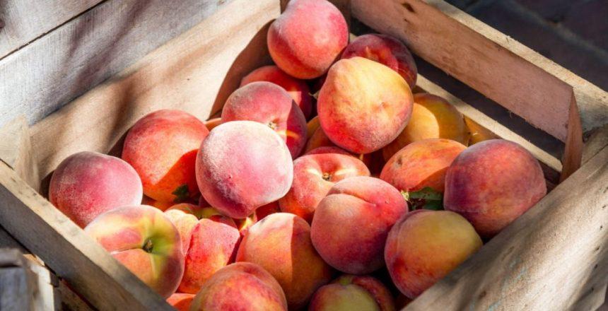 Meyer Peach Orchard