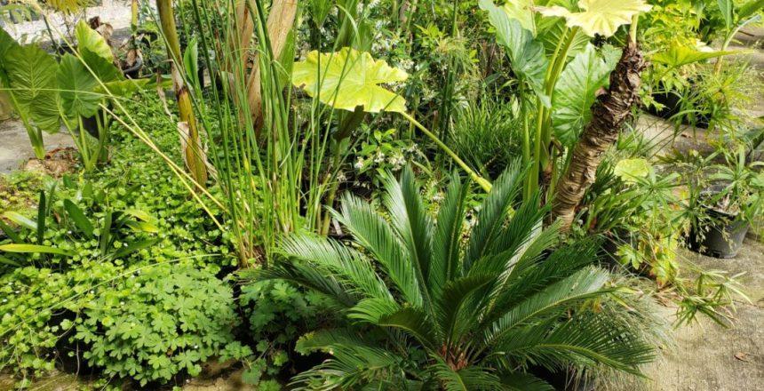 Raintree Tropical