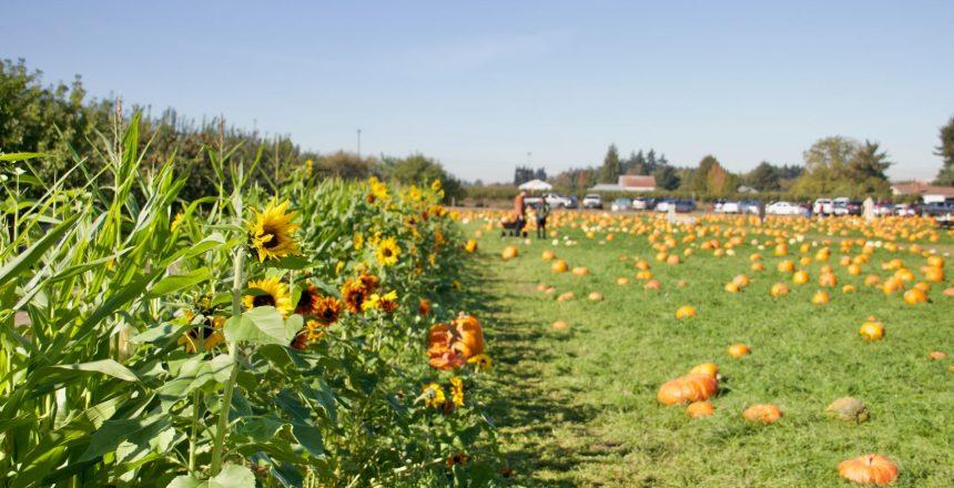 Wavra Farms and Nursery